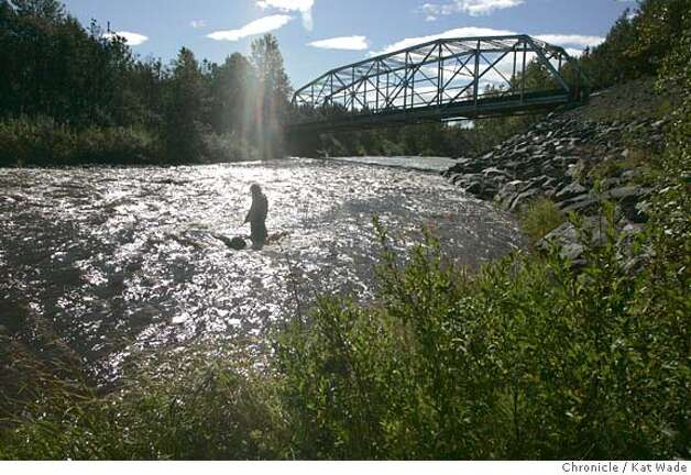 On 9/6/05 in Ninilchik AK Sue Mauger, a stream ecologist with the Cook Inlet Keeper, wades thigh deep through the strong currents to check the accuracy of an under water temperature logger in the Anchor River for a three year study of the changing temperatures of air and water on the Kenai Peninsula in southern Alaska.  Kat Wade/The Chronicle Photo: Kat Wade