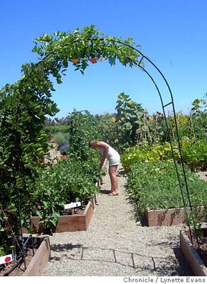 Colleen Machado tends purple beans in her Acampo garden, where prayer flags flutter under a vine-covered trellis. Vegetables and flowers are lush, growing in manure-amended soil without synthetic fertilizers, herbicides or pesticides. Chronicle photo by Lynette Evans