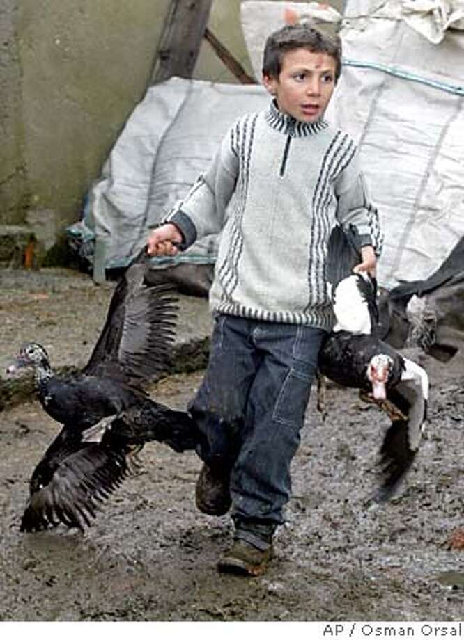 A child surrenders his ducks for destruction in Istanbul's Gazi Osman Pasa district, Tuesday, Jan. 10, 2006. Another Turk tested positive for the deadly H5N1 strain of bird flu Tuesday, bringing the number who have contracted the disease to 15, a Turkish Health Ministry official said. Imams issued warnings about the deadly virus through minaret loudspeakers and authorities distributed leaflets urging people to avoid fowl. (AP Photo/Osman Orsal) Photo: OSMAN ORSAL