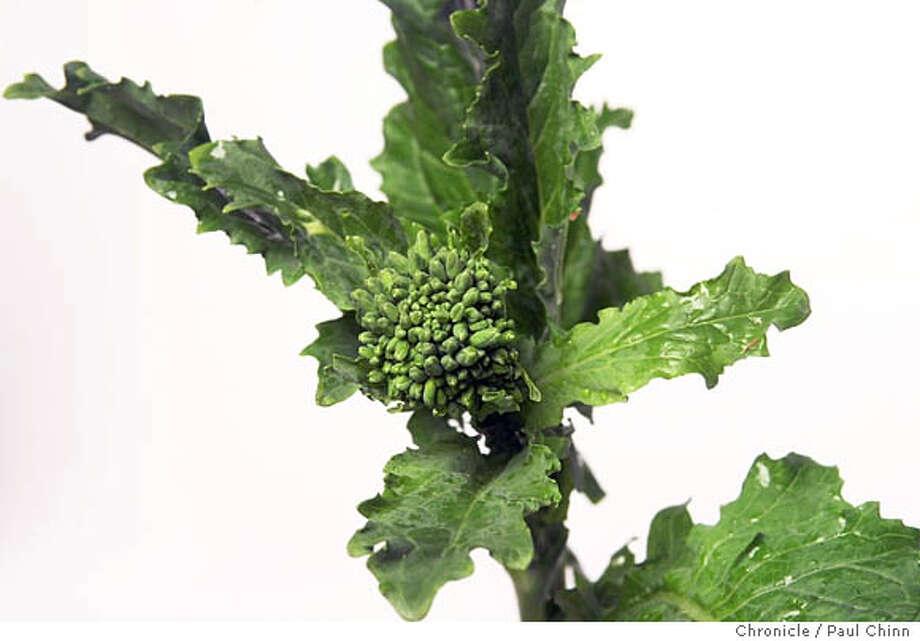PRODUCE4-C-09MAY02-FD-PC  Broccoli rabe. An assortment of produce items for the Produce Bin column.  PAUL CHINN/S.F. CHRONICLE Photo: PAUL CHINN