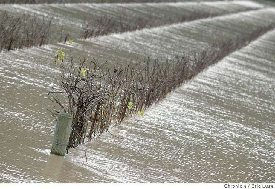 floods_sonoma207_el.JPG  Korbel Vineyards under water just outside of Guernville along River Road. Floods from recent rains devastated Sonoma County. Photographer:� Eric Luse / The Chronicle MANDATORY CREDIT FOR PHOTOG AND SF CHRONICLE/ -MAGS OUT Photo: Eric Luse
