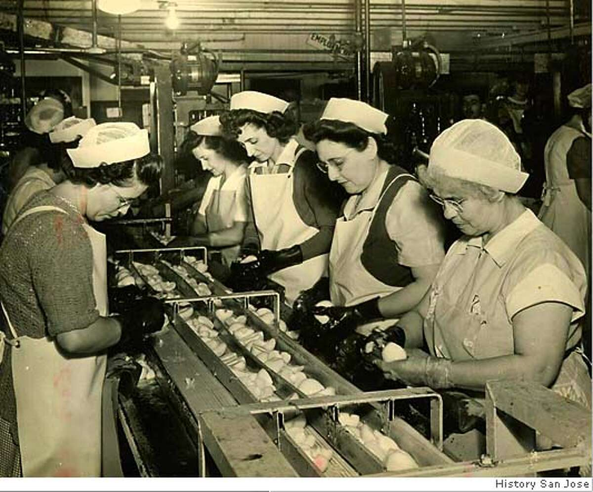 Women sort peaches at Del Monte Cannery No.3, where up to 2,000 people worked. Photo courtesy of History San Jose