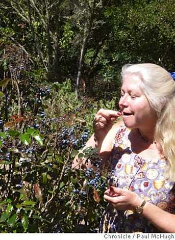 Kathy Crane of the Yerba Buena Native Plant Nursery samples an Oregon grape, a popular food plant for birds. MANDATORY CREDIT FOR PHOTOG AND SAN FRANCISCO CHRONICLE/NO SALES-MAGS OUT Photo: Paul McHugh