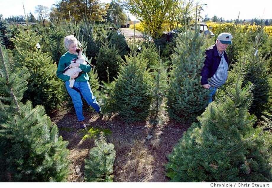 Taylor Christmas Tree Farm