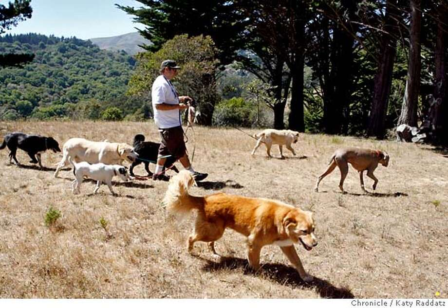 DOGS_016_RAD.jpg  SHOWN: A dog walker who goes by only the name Jetsun, walks his charges down the hill toThe Alta Trail, just above Marin City, where three dogs were poisoned last week.  (Katy Raddatz/The Chronicle)  **Jetsun Mandatory credit for the photographer and the San Francisco Chronicle. No sales; mags out. Photo: Katy Raddatz