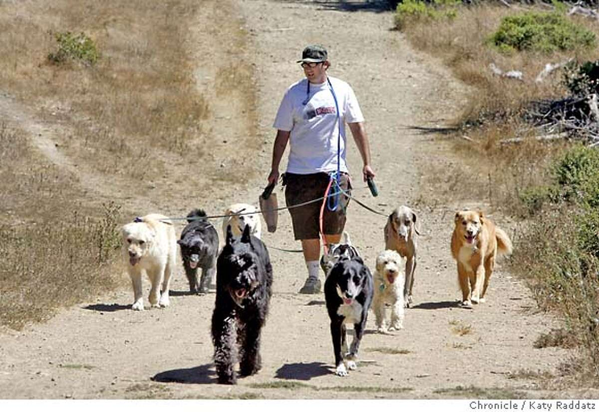 DOGS_019_RAD.jpg SHOWN: A dog walker, who goes by only the name of Jetsun, walks his charges on The Alta Trail, just above Marin City, where three dogs were poisoned last week. (Katy Raddatz/The Chronicle) **Jetsun