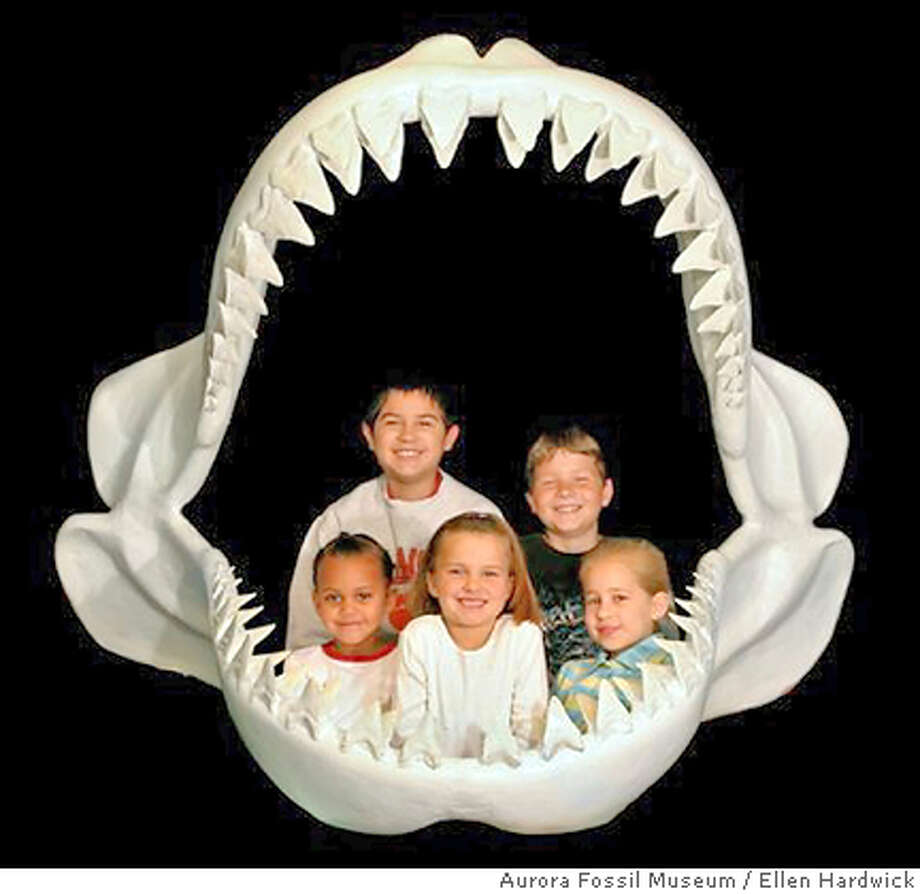 � View the world from the perspective of a megalodon's lunch at the Aurora Fossil Museum in Aurora, N.C. Illustrates TRAVEL-KIDS-MUSEUMS (category t), by Marylou Tousignant (c) 2007, The Washington Post. Moved Tuesday, July 31, 2007. (MUST CREDIT: By Ellen Hardwick _ Aurora Fossil Museum.) Photo: HANDOUT