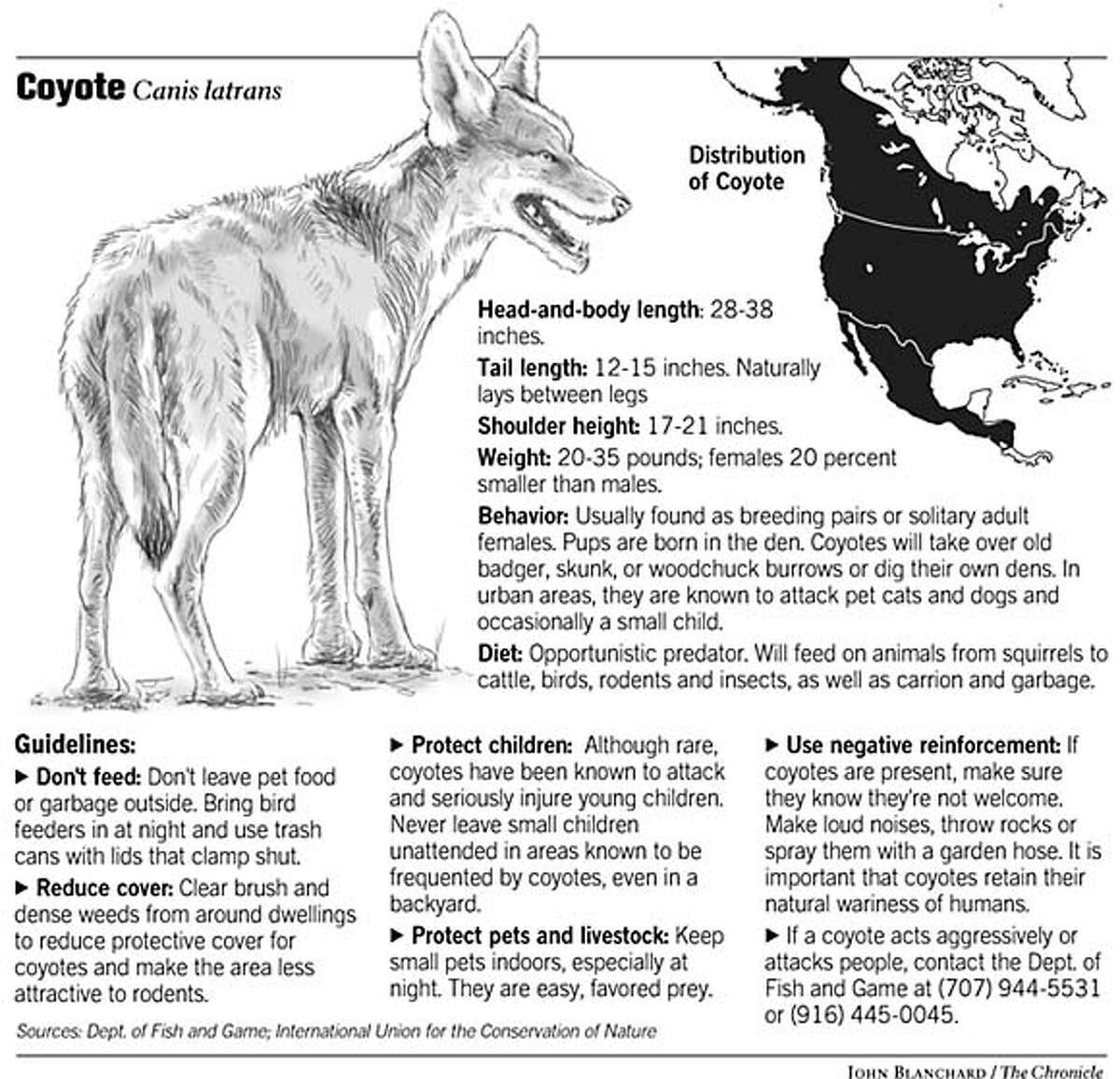 Coyote. Chronicle graphic by John Blanchard