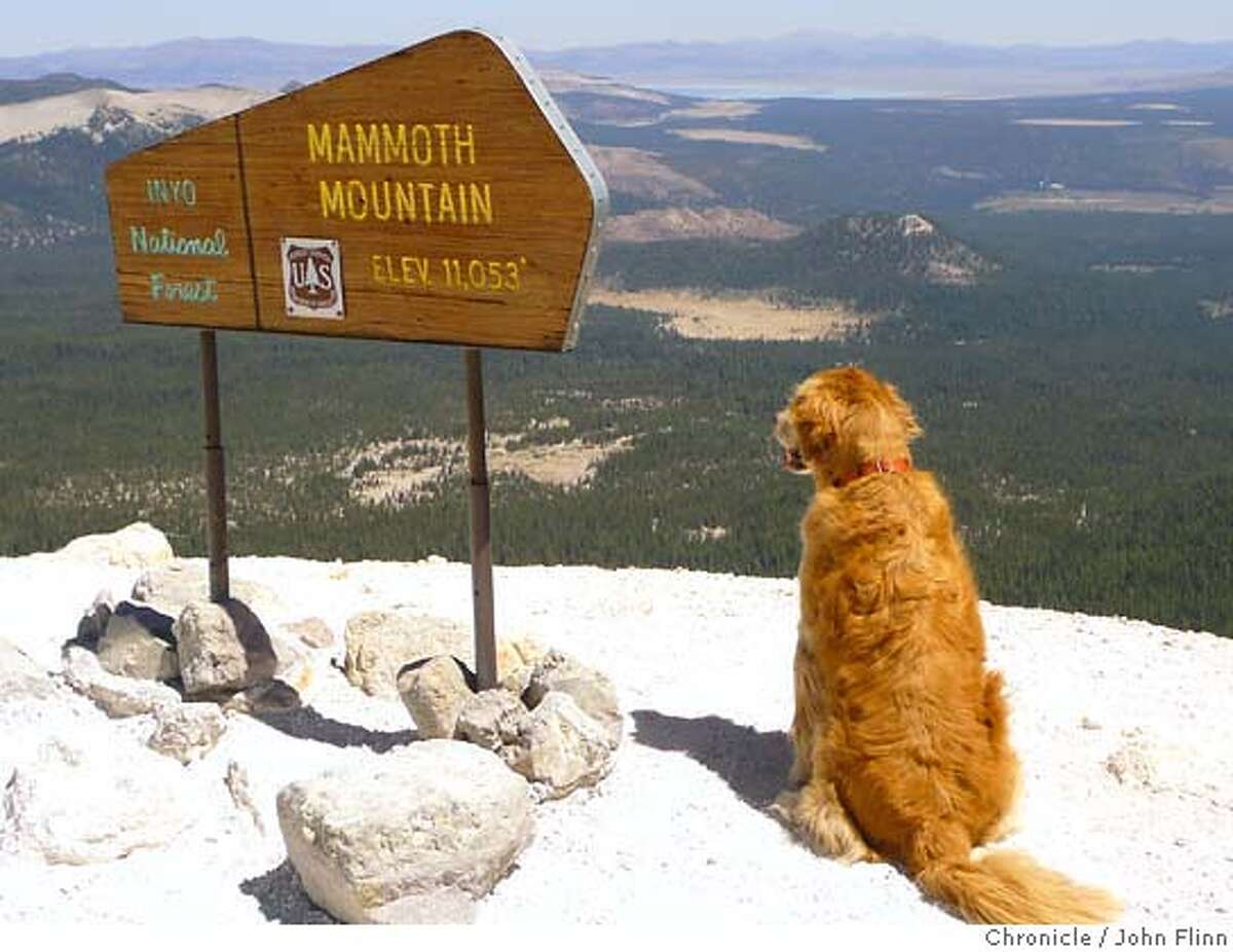 TRAVEL MAMMOTH -- Tucker, the author's golden retriever, takes in the view from the top of Mammoth Mountain, including Mono Lake in the distance. Photo by John Flinn / The Chronicle 2007
