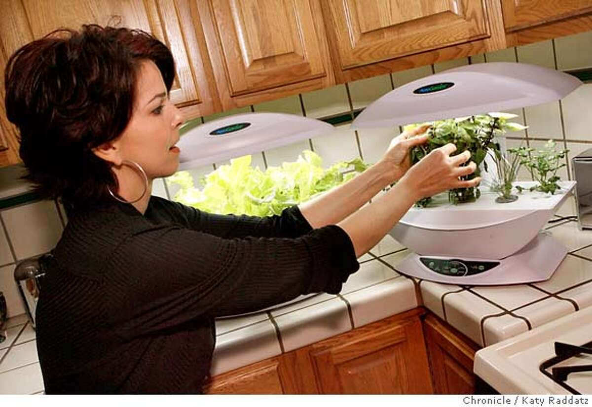 .jpg SHOWN: Tami Di Turo feels the strength of her basil leaves in her hydroponic AeroGarden kit--she grows salad greens and herbs for daily use on her kitchen counter top. Tuesday, July 17, 2007. (Katy Raddatz/The Chronicle) **Tami Di Turo Mandatory credit for the photographer and the San Francisco Chronicle. No sales; mags out.