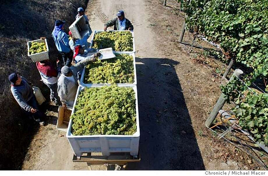 nbcrush024_mac.jpg Field workers fill tubs full of Chardonnay grapes ready to be crushed. The fall wine harvest is underway in the Napa Valley. We look at the wineries, vineyards, people and workers behind the fall crush.  9/23/03 in NAPA. MICHAEL MACOR/ The Chronicle Field workers fill tubs with Chardonnay grapes ready to be crushed. Napa Valley's fall wine harvest is in full swing. Napa Valley field workers fill tubs with Chardonnay grapes ready to be crushed. The Bay Area's fall wine harvest is in full swing. Field workers in Napa Valley fill tubs with Chardonnay grapes ready to be crushed. The Bay Area's fall wine harvest is in full swing. Photo: MICHAEL MACOR
