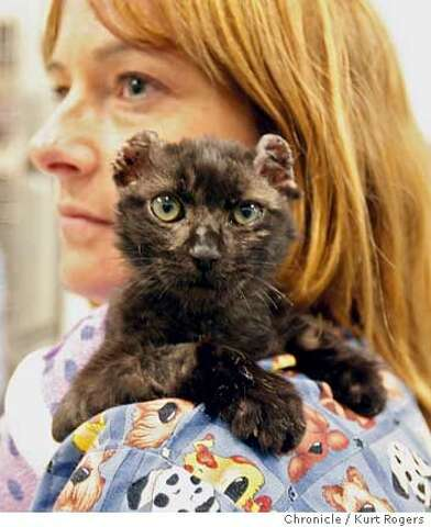 COTATI / Adam, the torched kitten, may need all 9 lives / With ear