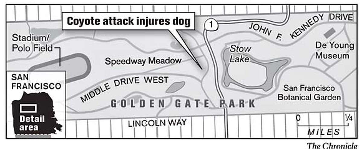 Coyote attack injures dog. Chronicle Graphic
