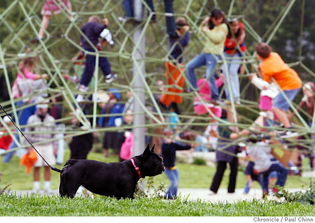 Lola the dog had to watch on the sidelines as kids played in the new Children's Playground that reopened at Golden Gate Park in San Francisco, Calif. on Saturday, July 14, 2007. The $3.8 million renovation project on the playground, that originally opened in 1887, took a year-and-a-half to complete.  PAUL CHINN/The Chronicle  **Lola Photo: PAUL CHINN