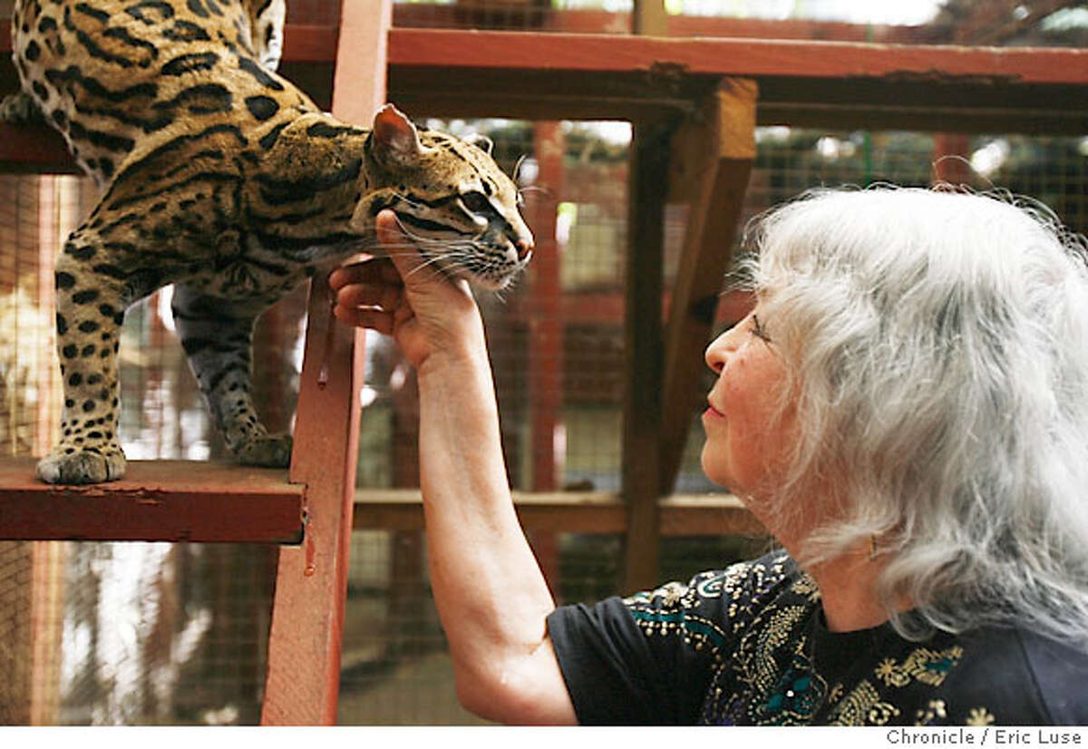 isisoasis15_476.JPG Loreon Vigne with Isis at the the sanctuary. Isis Oasis Sanctuary in Geyserville is a retreat, home to wild birds and African cats including Ocelots is owned and run by Loreon Vigne. Photographer: Eric Luse / The Chronicle names (cq) from source Loreon Vigne Isis