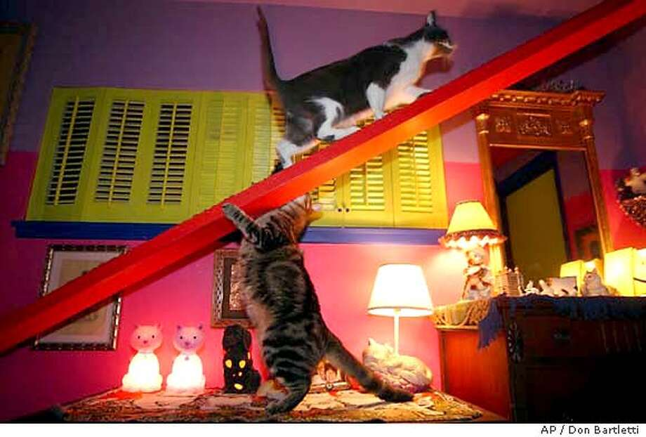 Bernard climbs the ramp in the bedroom while Stella takes a swipe from below. Owners Bob Walker and Frances Mooney have 11 cats - and one dog. Illustrates HOME-CATS (category l), by Scott Sandell � 2003, Los Angeles Times. Moved Thursday, Oct. 9, 2003. (MUST CREDIT: Los Angeles Times photo by Don Bartletti.) Photo: DON BARTLETTI