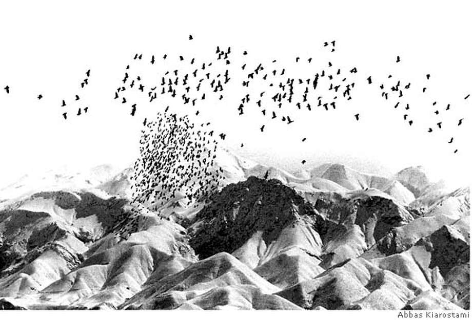 Abbas Kiarostami: Trees and Crows, 2006; 23 C-prints; each: 28-1/2 x 41-1/4 in.; collection of the Iranian Art Foundation, New York. Photo: Ho