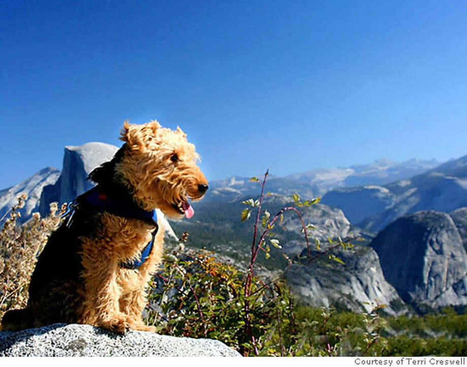TRAVEL JUSTBACK -- Terri Creswell, San Carlos, CA Email: terriclicks@yahoo.com  Daytime phone number: 650-592-7296 Just back from: Yosemite National Park, CA, USA I went because: To photograph the beauty of Yosemite and give my dog Bessie a vacation! Don't miss: Glacier Point which has the best overall views of Yosemite from 3214 feet high. Also Bridalveil Fall and Yosemite Falls. Don't bother: If you travel with a dog, don't bother venturing from the developed areas. They are only allowed on paved paths.But you still have 12 miles to explore Coolest souvenir: Photographs galore and a cool album bought at the General Store to put them in. Worth a splurge: The pet friendly Apple Tree Inn which has large rooms with fireplaces for you and Fido. Only 2 miles from the south Park entrance. I wish I'd packed: More compact flash cards for my digital camera. More treats for Bessie and a portable water bowl for her. Other comments: Yosemite is dog friendly so don't leave Fido behind. Just keep her on leash and follow the rules from the Rangers that apply to pet visitors. Details of attached photo (if sent): Bessie, a two year old Welsh Terrier Yosemite.jpg  10/29/06 in , . Photo: None