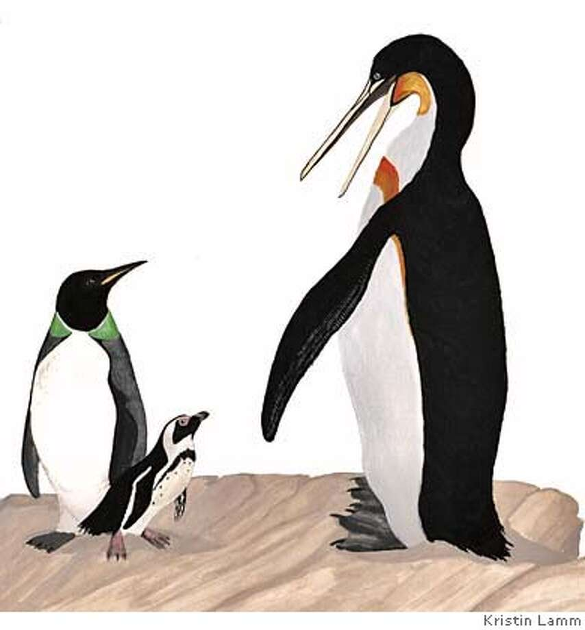 Picture showing two fossil penguins discovered in Peru, and a small modern-day one: The fossil giant penguin, Icadyptes salasi (right) whose fossil bones were found in Peru, was more than 5 feet high; the smaller fossil penguin, Perudyptes devriesi (left) was about three feet high.Both are compared to the only modern-day penguins that live along the coast of Peru. They are called Spheniscus humboldti (ca) and are about 15 inches high. Credit: Art by Kristin Lamm Photo: Daniel Ksepka