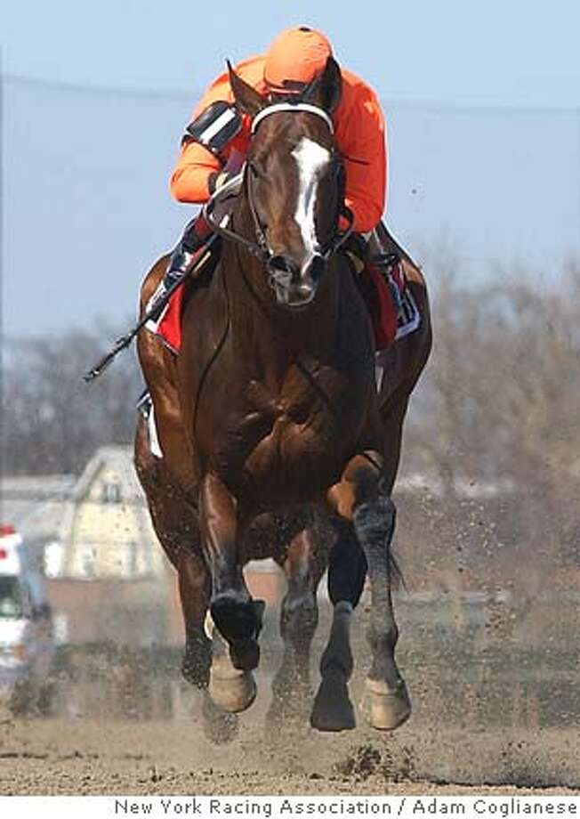 ** FILE ** In this hand out photo provided by New York Racing Association, Lost in the Fog, ridden by Russell Baze, cruises home in the $150,000 Bay Shore in this April 9, 2005 photo at Aqueduct in New York. (AP Photo/New York Racing Association, Adam Coglianese) Ran on: 10-27-2005  Lost in the Fog might be NorCal's first Breeders' winner. Ran on: 10-27-2005  Lost in the Fog might be NorCal's first Breeders' winner. Photo: ADAM COGLIANESE