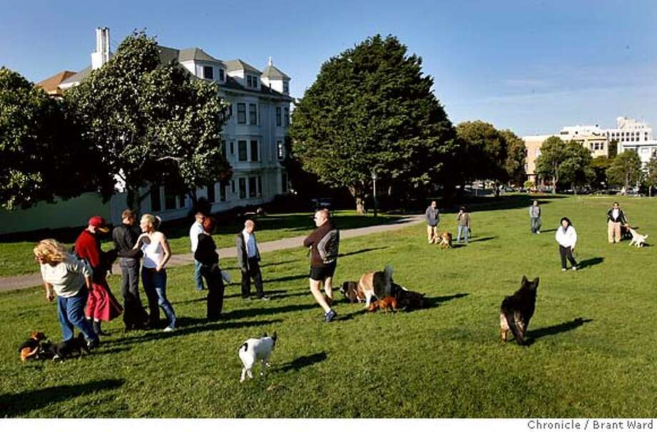In this file photo, dogs play at San Francisco's Duboce Park.  Photo: Brant Ward