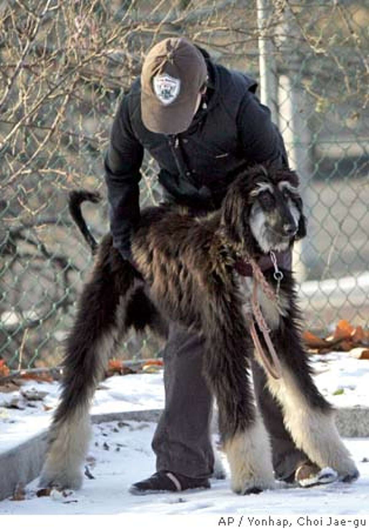 Snuppy, the first cloned dog succeeded by South Korean stem cell researcher Hwang Woo-suk, plays with an unidentified researcher on the snow at the Seoul National University in Seoul, Friday, Dec. 23, 2005. Researcher Hwang Woo-suk apologized Friday and resigned from a South Korean university after the school announced that he fabricated results in stem-cell research that had raised hopes of new cures for hard-to-treat diseases. (AP Photo/Yonhap, Choi Jae-gu) ** KOREA OUT ** Ran on: 12-24-2005 Snuppy, claimed by stem cell researcher Hwang Woo Suk to be the first cloned dog, plays outside Seoul National University.