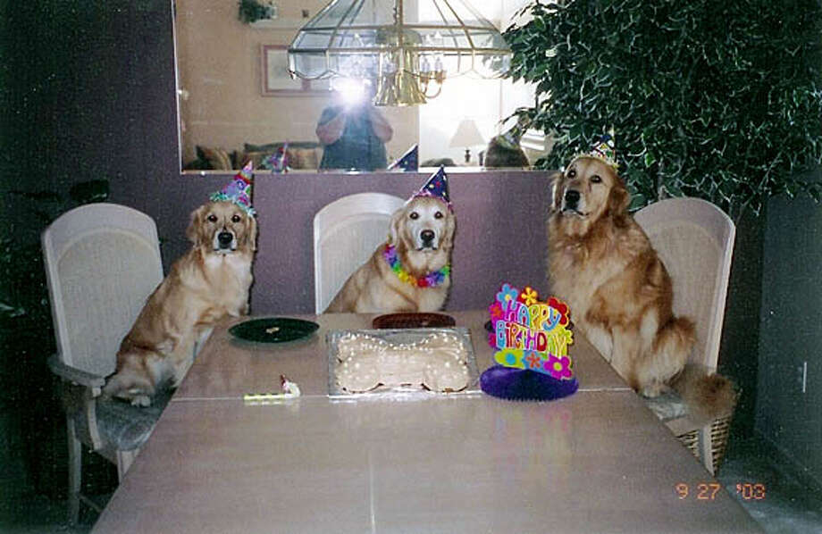 The dogs at the birthday party are from left to right: Ellie, Rosie and Bogie. Credit: Kim Stover Photo: Kim Stover