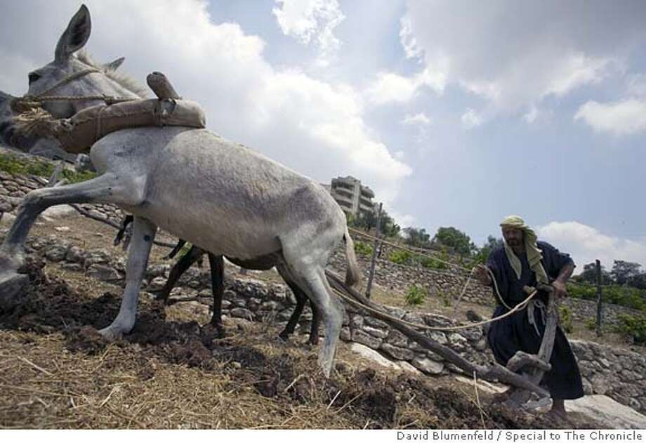 Nazareth, Israel: A farmer uses ancient farming techniques from the time of Jesus to plow a field at the Nazareth Village. Photo by David Blumenfeld/Special to The Chronicle Photo: David Blumenfeld/Special To The