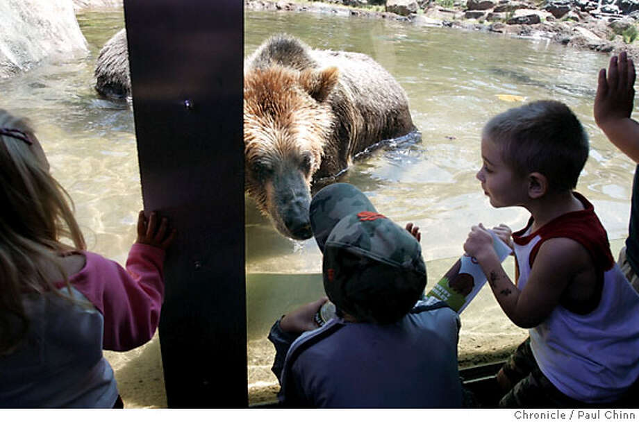 Kiona goes nose-to-nose with a young visitor after the Hearst Grizzly Gulch bear exhibit opened to the public at the zoo in San Francisco, Calif. on Thursday, June 14, 2007. The $3.7 million habitat features a waterfall, stream and a 20,000 gallon pool to splash in.  PAUL CHINN/The Chronicle Photo: PAUL CHINN