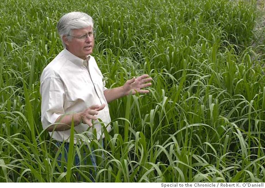 SUPERWEED 075.jpg  John Caveny, a turkey farmer near Monticello Illinois, is growing Miscanthus as a commercial venture. Photos on his farm Tuesday afternoon May 22, 2007. By Robert K. O'Daniell/ ** John Caveny (business card) Photo: Robert K. O'Daniell