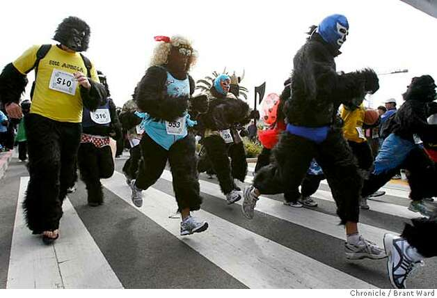And they're off...the 400 plus gorillas began their run through Golden Gate Park.  The first annual San Francisco Great Gorilla Run began in Golden Gate Park just near the bandshell Sunday. Over 400 people, dressed as gorillas, ran a 7K race to raise funds for mountain and low land gorillas threatened in the Congo, Uganda and Rwanda.  {Brant Ward/San Francisco Chronicle}6/10/07 Photo: Brant Ward