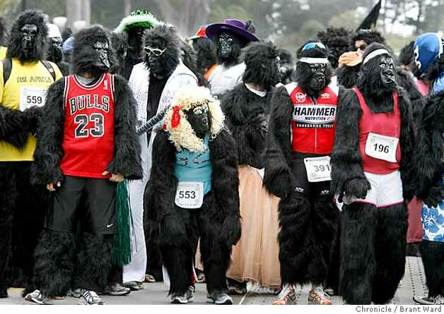 Gorillas gathered at the starting line, getting ready for the start of the 7K race.  The first annual San Francisco Great Gorilla Run began in Golden Gate Park just near the bandshell Sunday. Over 400 people, dressed as gorillas, ran a 7K race to raise funds for mountain and low land gorillas threatened in the Congo, Uganda and Rwanda.  {Brant Ward/San Francisco Chronicle}6/10/07 Photo: Brant Ward