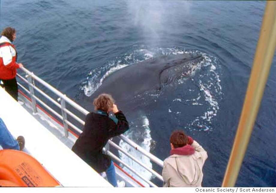 Humpback whale blows next to stationary whale watching boat: Photo credit: Scot Anderson/Oceanic Society  One time use only in association with the Tom Stienstra article  Ran on: 06-10-2007  Humpback whales have been feeding roughly three miles east of the Southeast Farallon Island, according to the Oceanic Society. Here, one blows next to a whale watching boat.  Ran on: 06-10-2007 Photo: Scot Anderson