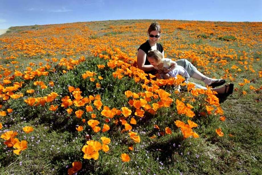 SPRING20119.jpg_  Finally, it seems like spring has arrived, Tami Fox and her daughter Savannah age 17 mo from Castaic Ca play in the 1,745 acre State Poppy Reserve nestled in southern California's Antelope Valley outside of Lancaster Calif Wed. By Lance Iversen/San Francisco Chronicle Photo: Lance Iversen