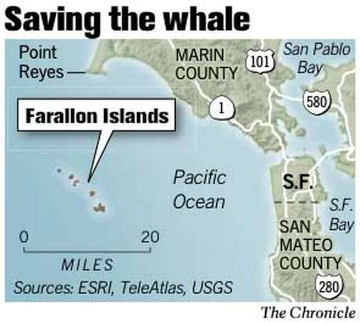 Saving the Whale. Chronicle Graphic