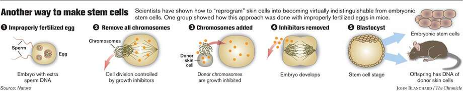 Another way to make stem cells. Chronicle graphic by John Blanchard