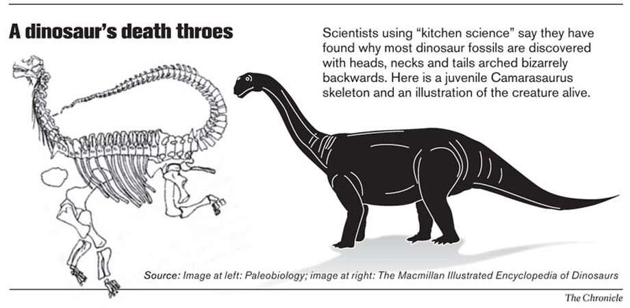 A Dinosaur's Death Throes. Chronicle Graphic