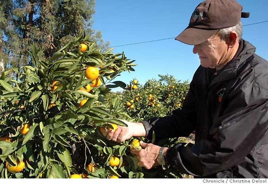 TRAVEL NEWCASTLE, Placer Co. -- Larry Snow in the orchard at Snow's Citrus Court.  Christine Delsol/The Chronicle Photo: Christine Delsol