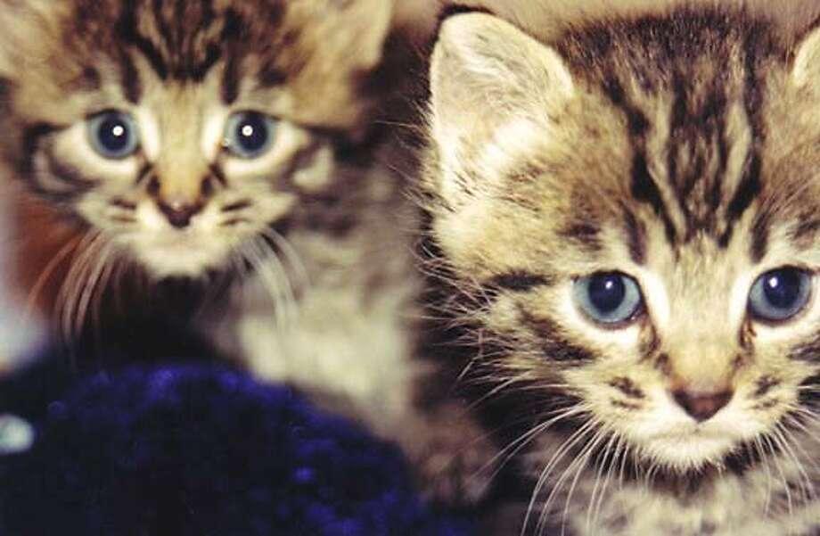 Kittens Photo: Laura Rose