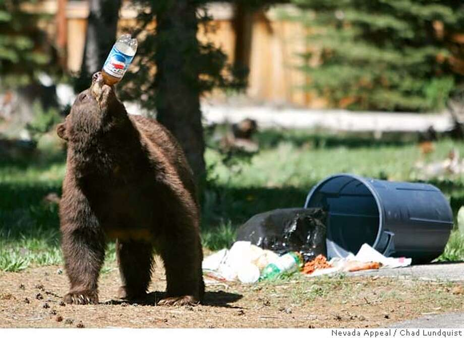 A black bear takes a drink from a plastic soda bottle after trash from Memorial Day weekend was left out for pick-up on Tuesday, May 29, 2007, near South Lake Tahoe, Calif. (AP Photo/Nevada Appeal, Chad Lundquist) ** MAGS OUT, NO SALES ** MAGS OUT, NO SALES, STAND ALONE PHOTO Photo: Chad Lundquist