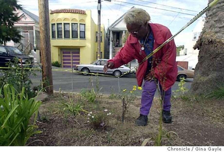 A street in the Bayview Hunters Point neighborhood has been transformed by gardens in the median. Two neighbors, Annette Young Smith and Karl Paige started it and then other neighbors joined in. Soon the entire median will have gardens. Annette tends to her garden looking for weeds to pull out. 8/19/03 in San Francisco. GINA GAYLE / The Chronicle Photo: GINA GAYLE