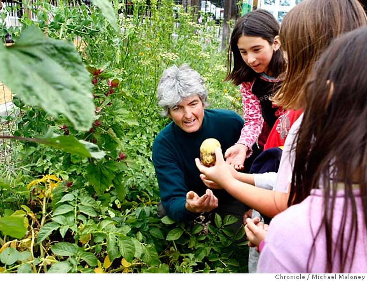 Rivka Mason shows her students a potato that was growing in their garden at Malcom X Elementary School. A Jefferson Award profile of Rivka Mason, a teacher who started a garden and outdoor ecology center at Malcolm X Elementary School in Berkeley. Photo taken on 5/11/07 in Berkeley, CA. Photo by Michael Maloney / San Francisco Chronicle *** Rivka Mason A Jefferson Award profile of Rivka Mason, a teacher who started a garden and outdoor ecology center at Malcolm X Elementary School in Berkeley. Photo taken on 5/11/07 in Berkeley, CA. Photo by Michael Maloney / San Francisco Chronicle *** Rivka Mason MANDATORY CREDIT FOR PHOTOG AND SF CHRONICLE/NO SALES-MAGS OUT