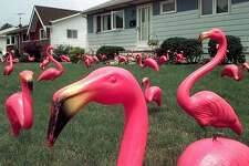 Pink flamingo is still an official Crayola color, but the plastic lawn ornament is officially dead: It will no longer be manufactured, thus depriving future generations of the pink icon of pop culture. Associated Press Photo, 1998