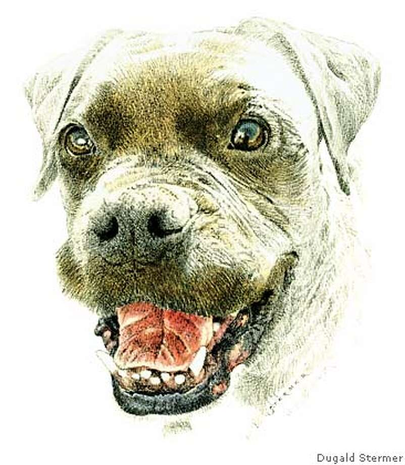 The polarizing pit bull -- is a ban the answer? Illustration by Dugald Stermer