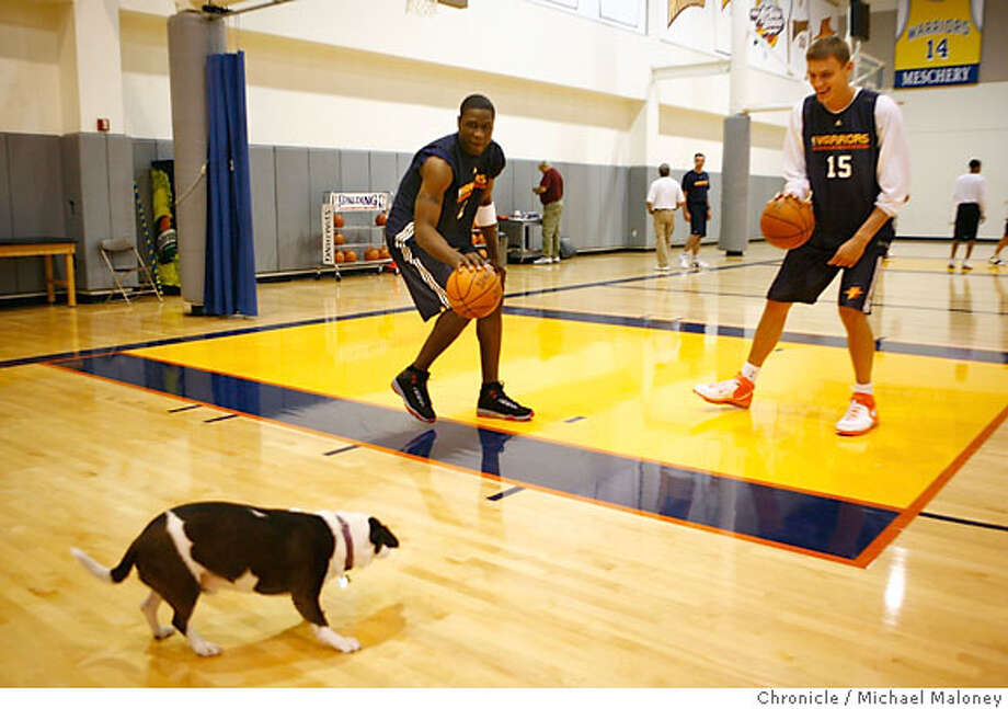 Head coach Don Nelson's dog 'Lucky' finds a tough defensive wall in Golden State Warriors Mickael Pietrus (left) and Andris Biedrins as they teased the dog during practice.  The Golden State Warriors hold a press conference and short workout at their practice facility in downtown Oakland, CA on April 16, 2007.  Photo by Michael Maloney / San Francisco Chronicle *** Mickael Pietrus and Andris Biedrins Photo: Michael Maloney