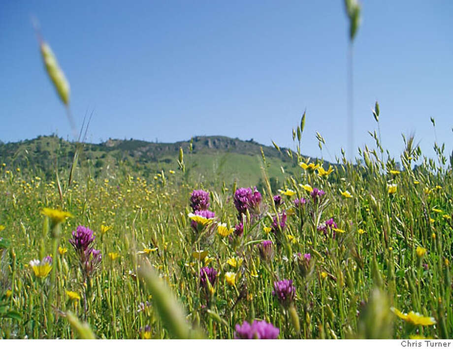 Caption: Wildflowers at the Rooster Comb formation, Henry W. Coe State Park.  Credit: Chris Turner Photo: Chris Turner