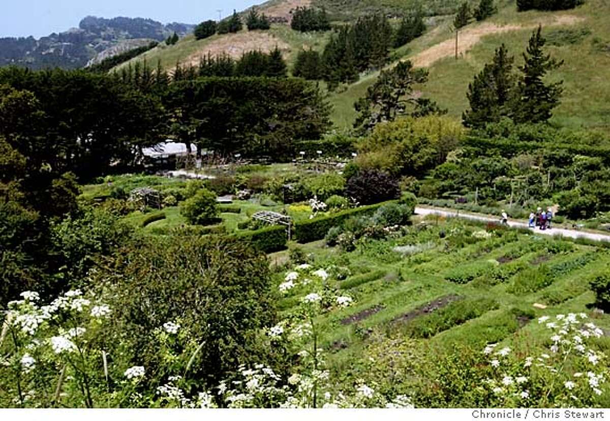 Event on 6/16/03 in Muir Beach. Green Gulch Farm at the Zen Center, 1601 Shoreline Highway, near Muir Beach includes a formal herb circle, which is the showiest part of the garden with its square hedge enclosure, roses, curving mixed borders of shrubs, perennials, annuals and symmetrical placement of 4 rose arbors and Japanese snowbell growing in the center. Other areas of interest: entry through tall cypress-type hedges with flower borders; rectangular working beds for cut flowers; espaliered fruit trees; permaculture demonstration area; bamboo Peace garden. CHRIS STEWART / The Chronicle