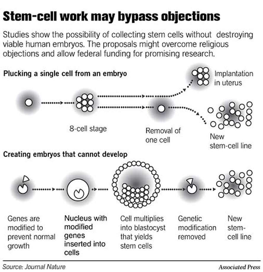 Stem-Cell Work May Bypass Objections. Associated Press Graphic