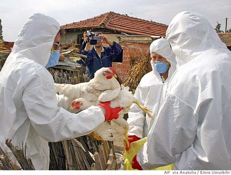 Officials collect chickens for culling to fight an outbreak of avian flu in Kiziksa village, in western Turkey, Tuesday Oct. 11, 2005. Turkish authorities on Tuesday ordered poultry farmers in a quarantined area in western Turkey to hand over birds for culling or face fines and possible jail sentences as Turkey tried to contain an outbreak of suspected bird flu. (AP Photo/Anatolia/EMRE UMURBILIR) ** TURKEY OUT ** PHOTO MADE AVAILABLE WEDNESDAY OCT. 12, 2005 TURKEY OUT Photo: EMRE UMURBILIR