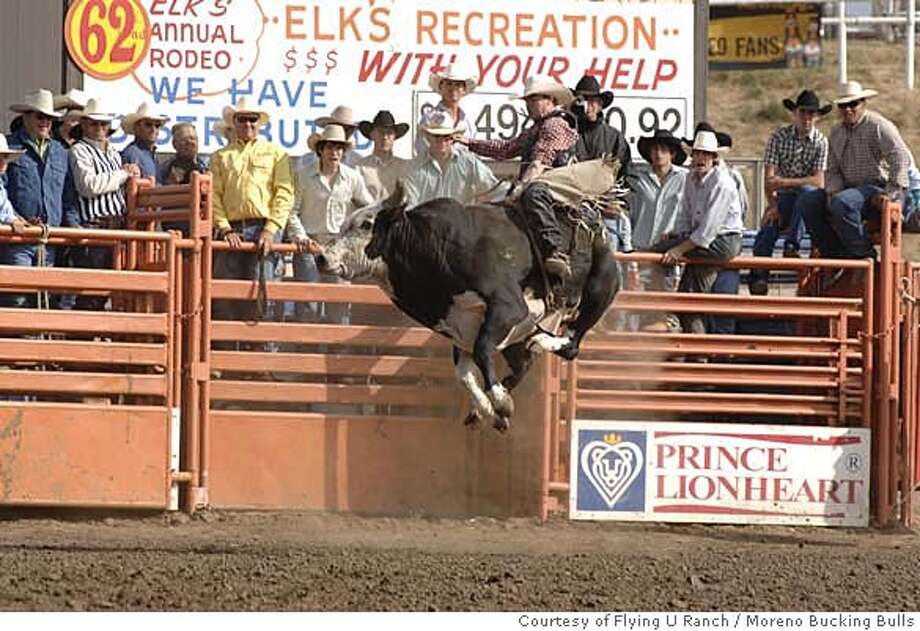 The star bucking bull Reindeer Dippin' goes for low orbit during a rodeo competition. CREDIT: Courtesy of Flying U Ranch/Moreno Bucking Bulls Photo: Courtesy Of Flying U Ranch/Moren